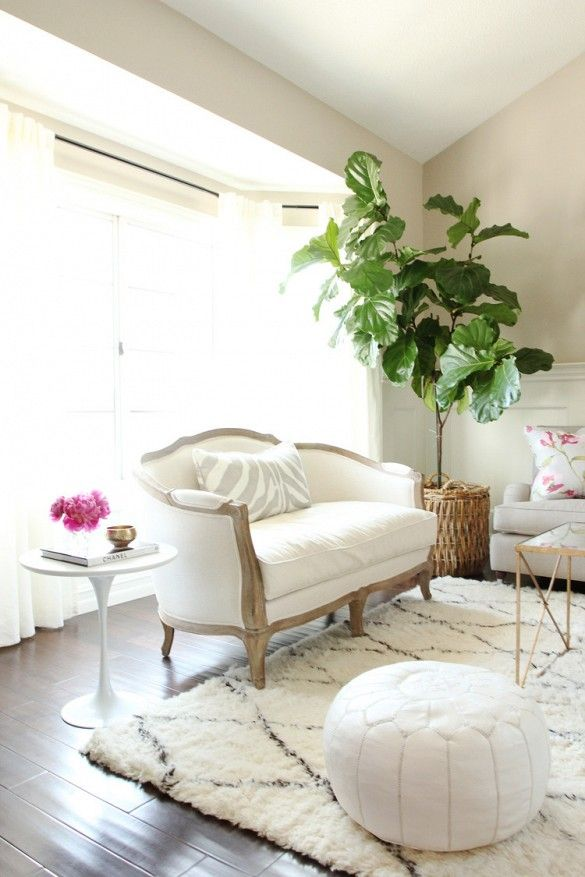 How To Not Kill Your Fiddle Leaf Fig Tree Via Thefoxandshe